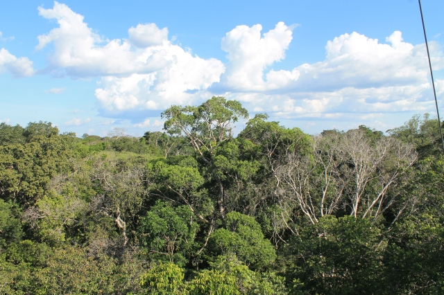 Impression of the Amazon from the crown of a tree.